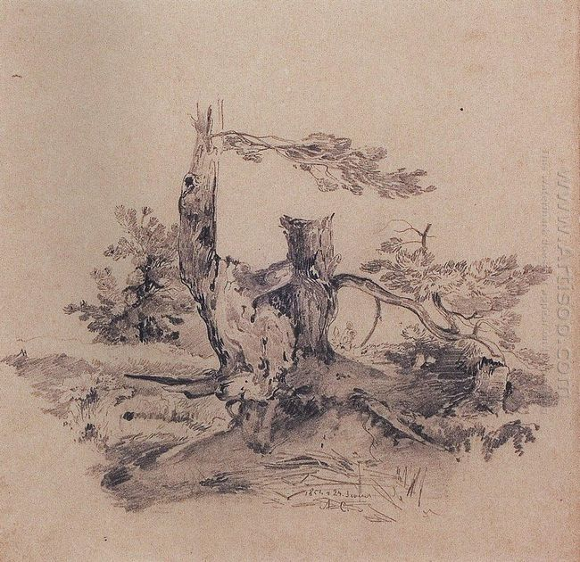 pines adjacent to the root of the barrel 1854