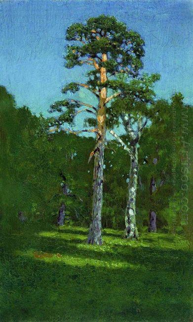pine 1878