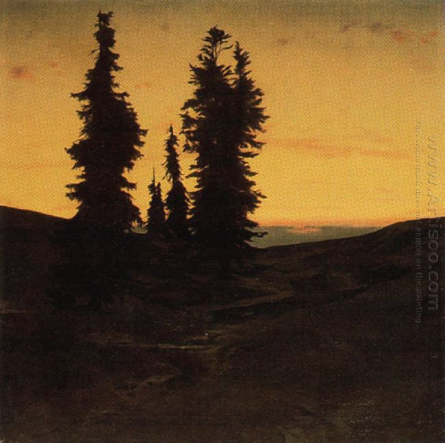 fir trees at sunset