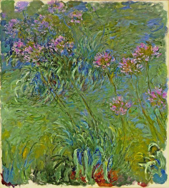 Agapanthus Flowers 1917