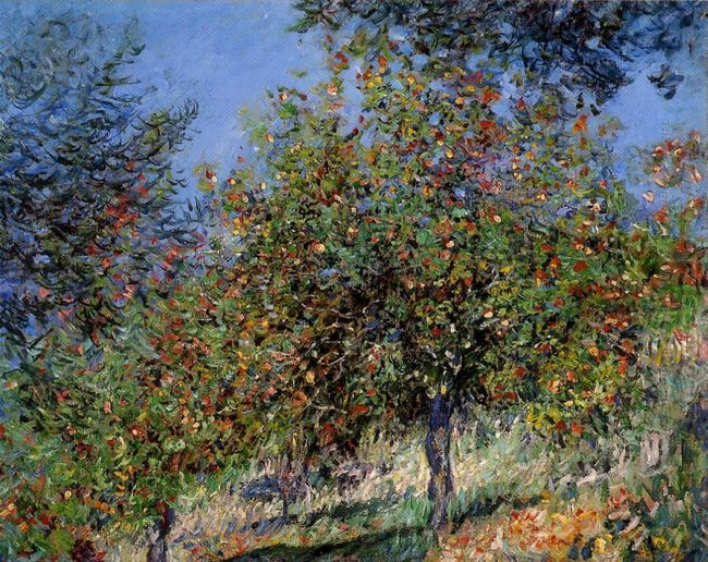Apple Trees On The Chantemesle Hill