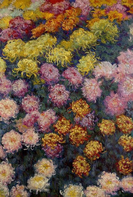 Bed Of Chrysanthemums