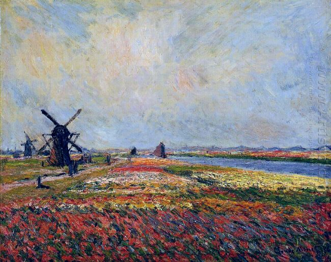 Fields Of Flowers And Windmills Near Leiden