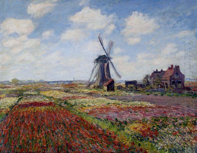 Fields Of Tulip With The Rijnsburg Windmill