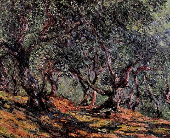Olive Trees In Bordigher