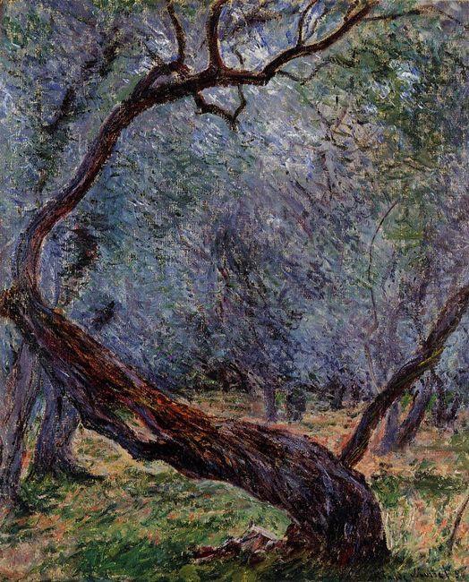 Olive Trees Study