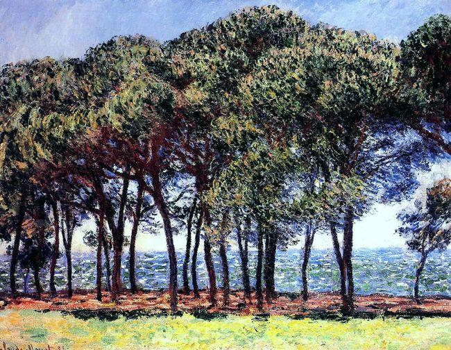 Pine Trees Cap D Antibes