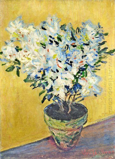 White Azaleas In A Pot 1885
