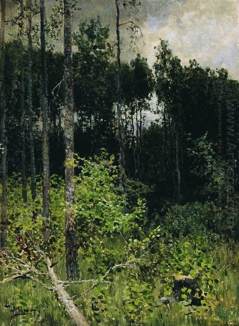 Aspen Spinny A Gray Day 1884