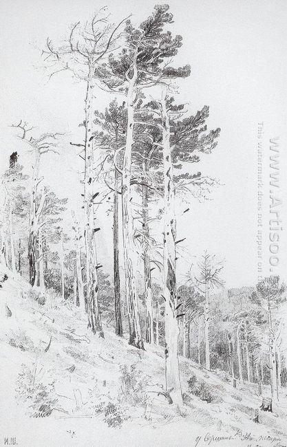 At The Top Of The Ai Petri 1879