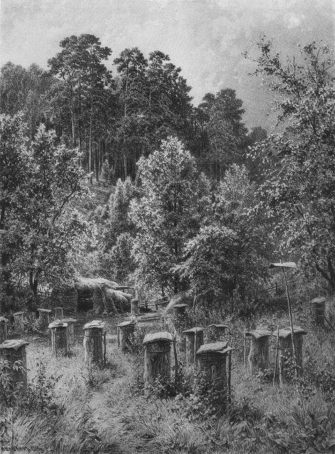 Bee Families 1884