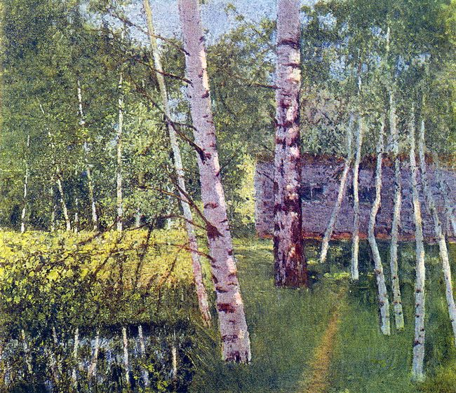 Birches In Summer