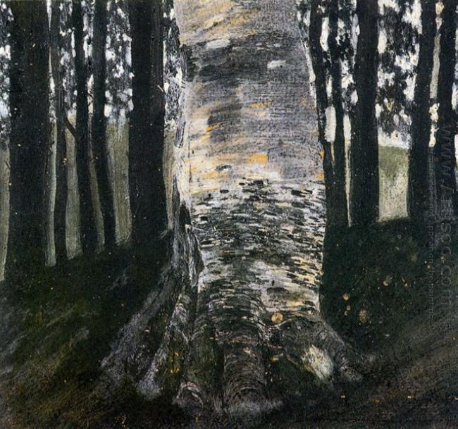 Birch In A Forest