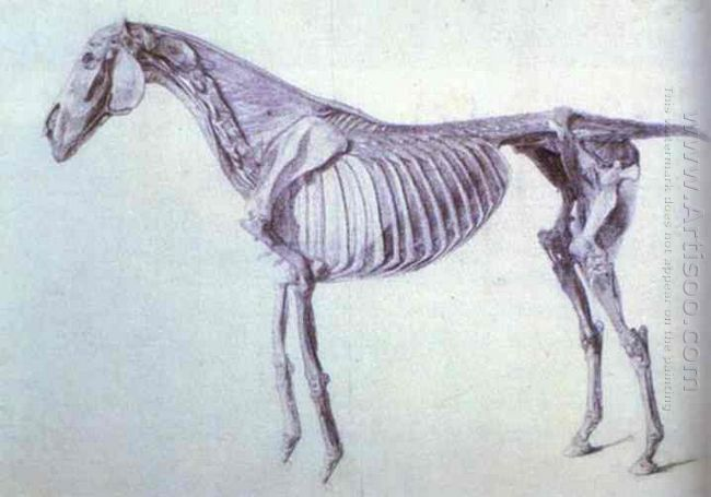 Diagram From The Anatomy Of The Horse