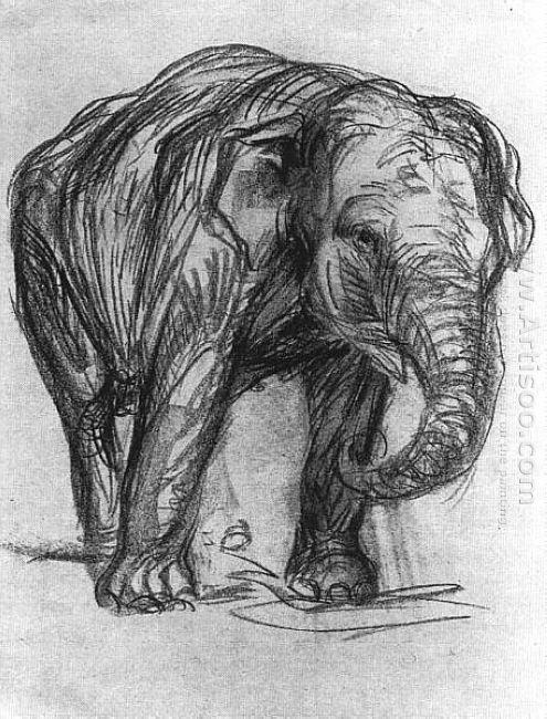 Elephant 1907