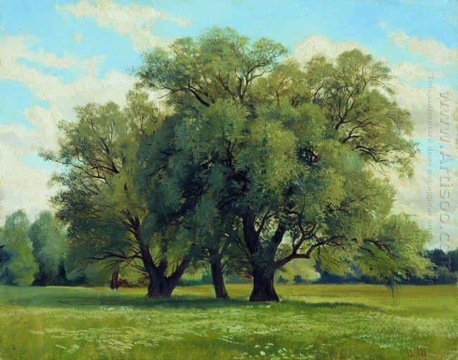 Oil Oaks