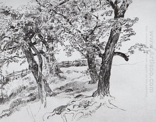Oil Trees