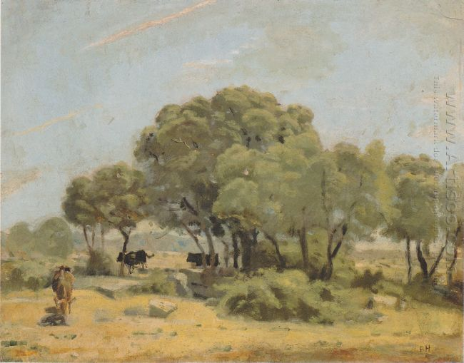 Olive Trees In Spain 1878
