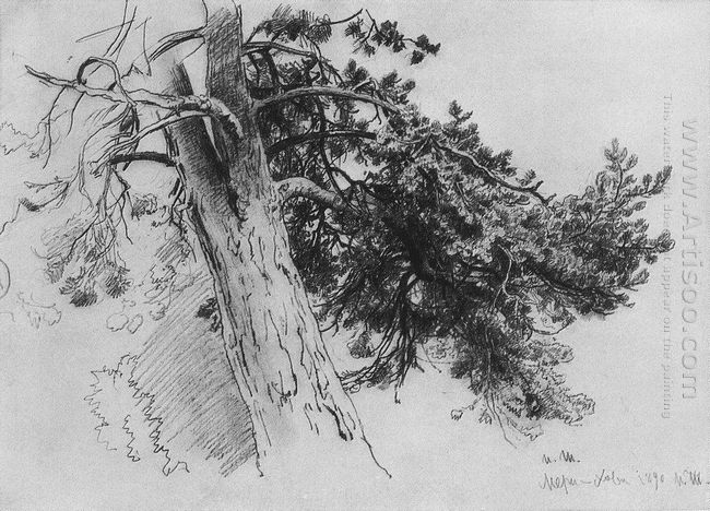 Part Of The Trunk Of A Pine Mary Howe 1890