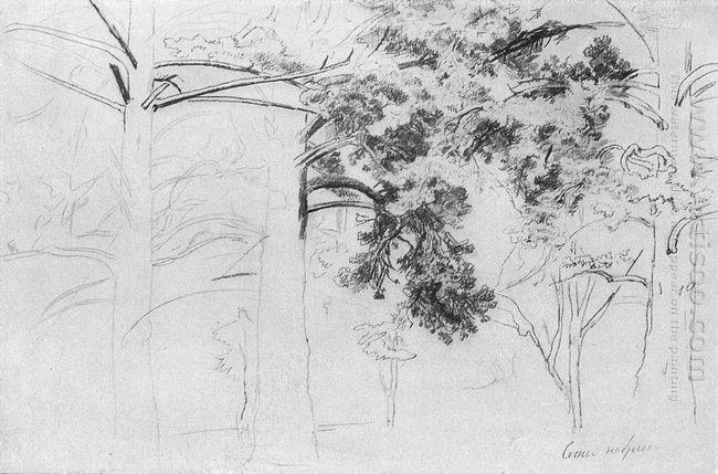 Pines 1895