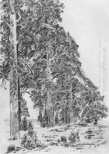 Pines On The Beach 1877