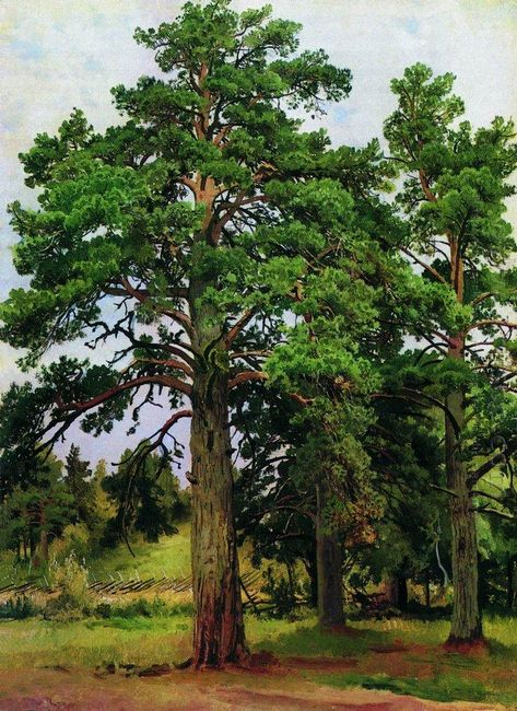 Pine Without The Sun Mary Howe 1890