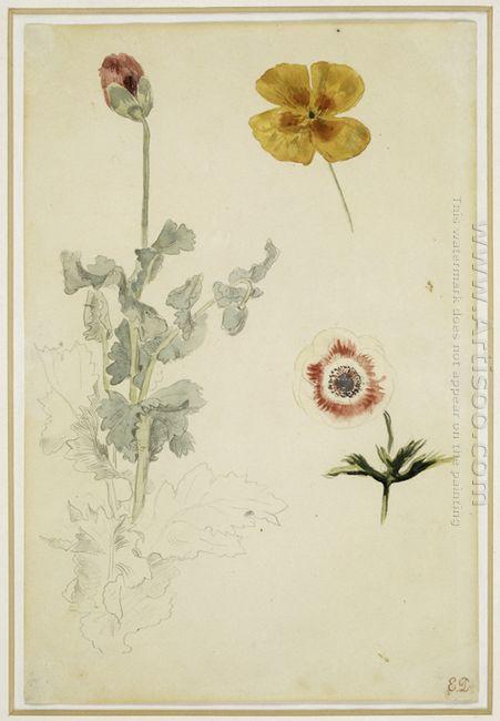 Study Of Flowers 1850