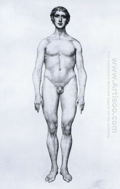Study Of The Human Figure Anterior View From A Comparative Anato