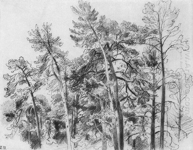 The Tops Of The Pines 1