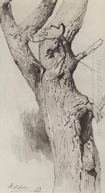 The Trunk Of An Old Tree 1883