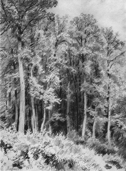 Trees Kozlovka Zaseka 1873
