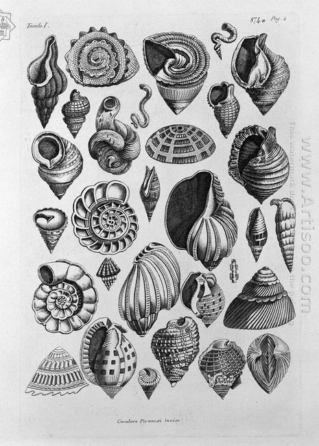 Various Shells Taken From The Real