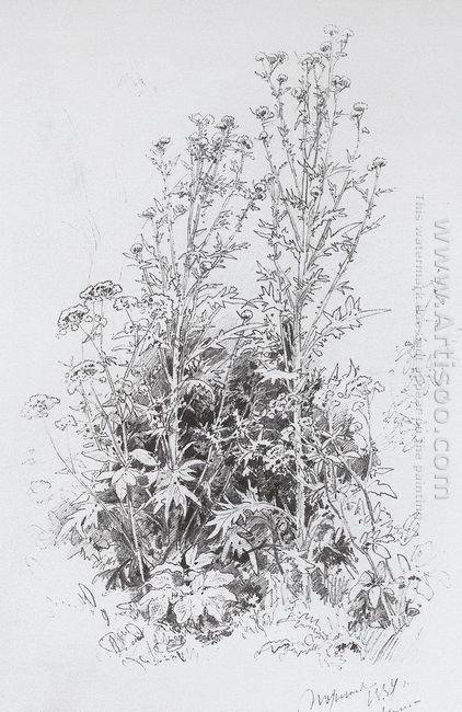 Wildflowers 1884