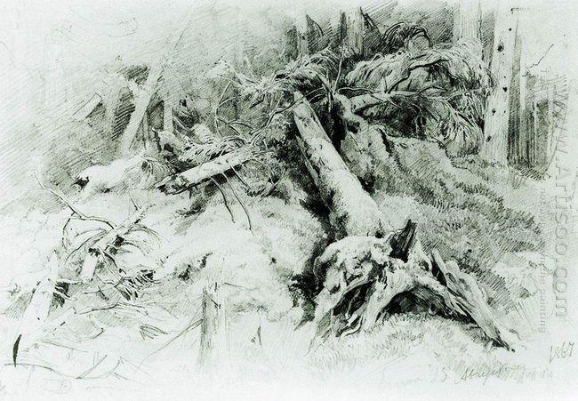 Wind Fallen Trees 1867