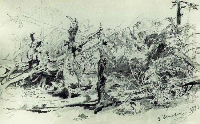 Wind Fallen Trees 1890