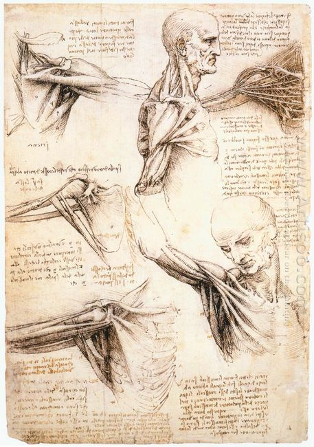 Anatomical Studies Of The Shoulder