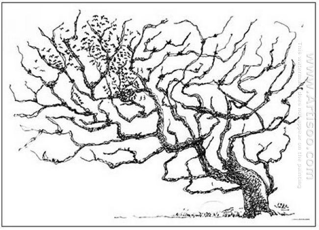 A Tree 1972