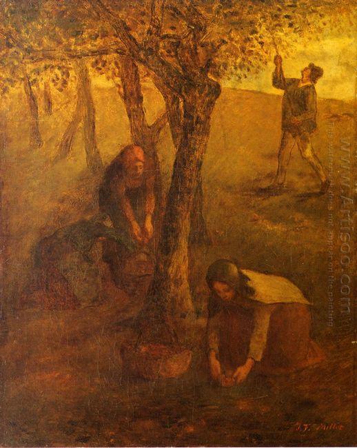 Gathering Apples