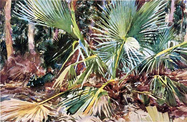 Palmettos Florida 1917