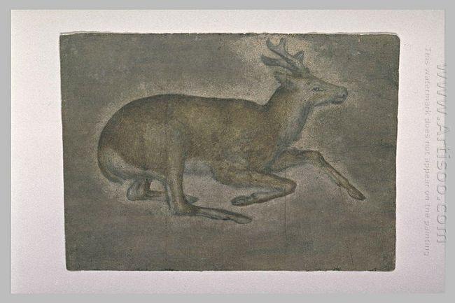Sketch Of Young Deer