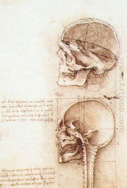 Studies Of Human Skull 1489