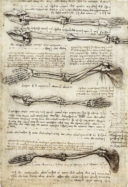 Studies Of The Arm Showing The Movements Made By The Biceps