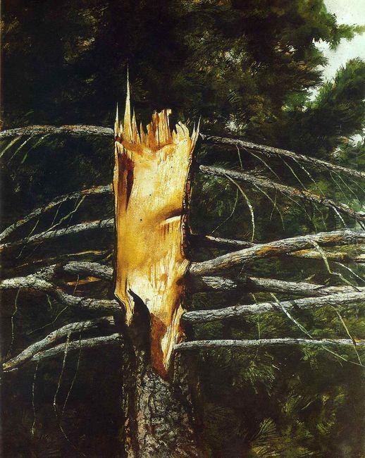 Torn Spruce