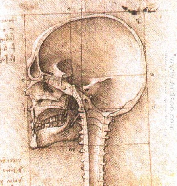 View Of A Skull 1