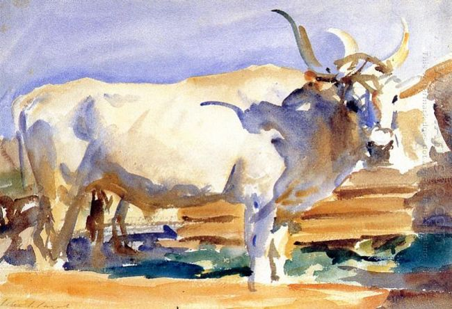White Ox At Siena