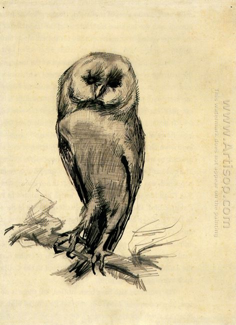 Barn Owl Viewed From The Front 1887