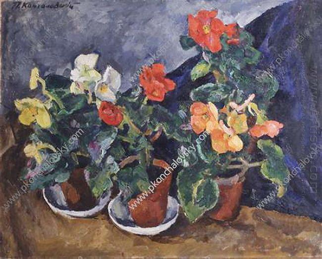 Begonias 1915
