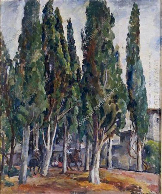 Crimea Cypress 1930