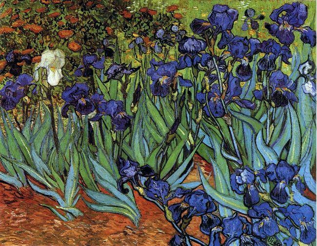 Irises 1889