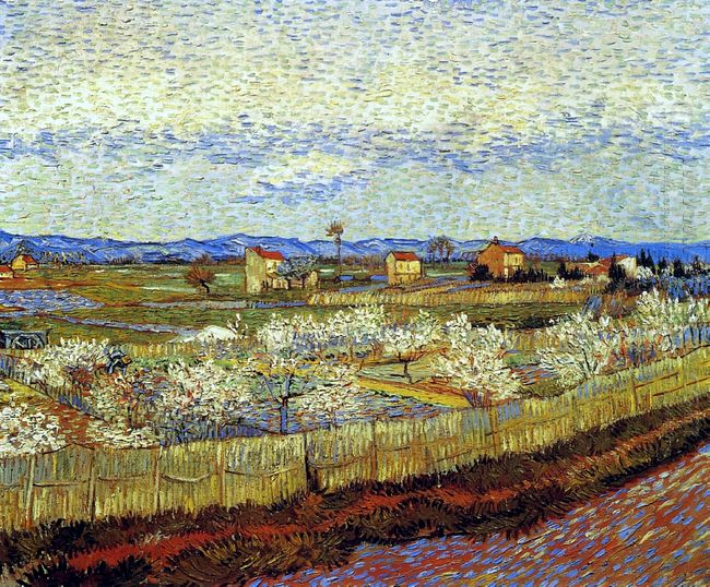 Peach Trees In Blossom 1889